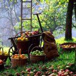 Foodal